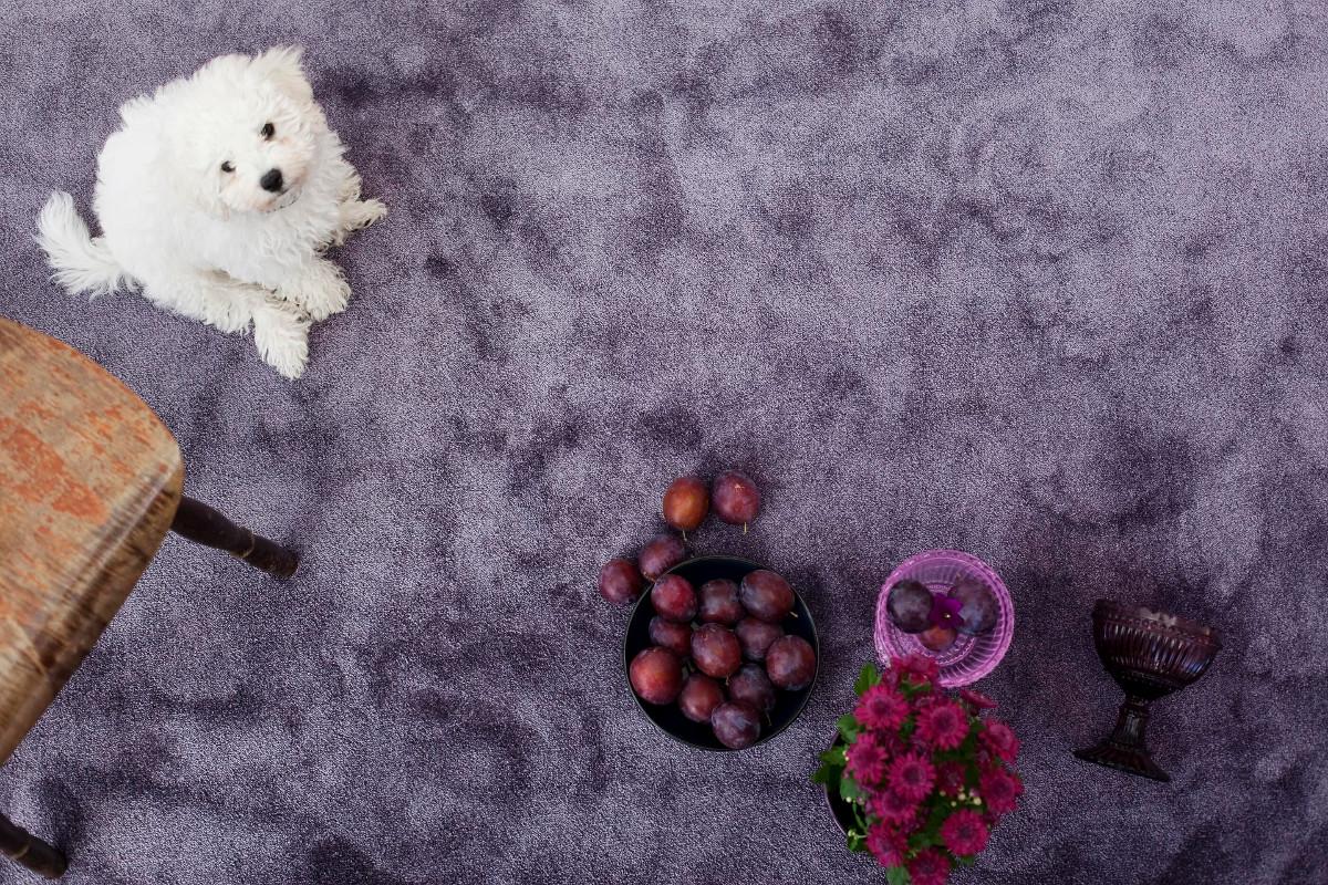 VM Carpet Satine matto 001 lila